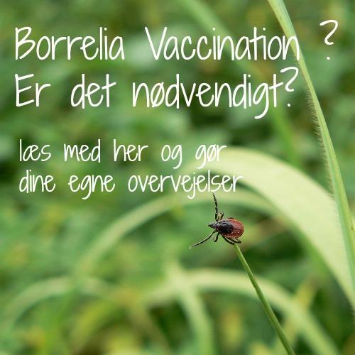 Borrelia vaccination – er det noget jeg skal overveje?