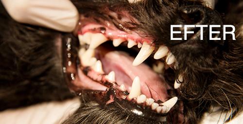 Tandbehandling-efter-lille