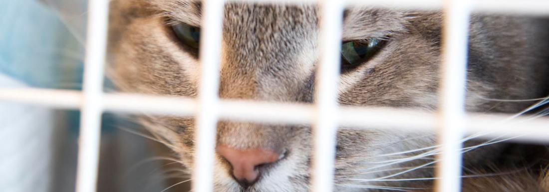 katte vaccination hvor ofte