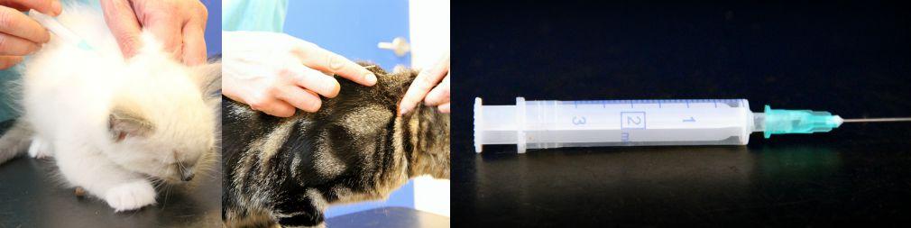 Hvor ofte skal min hund eller kat vaccineres?